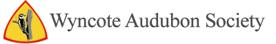 Wyncote Audubon Society Logo