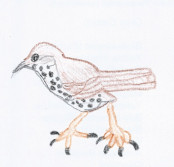 woodthrush-blog